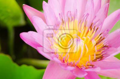 Постер Лотос Красивый розовый цветок лотосаЛотос<br>Постер на холсте или бумаге. Любого нужного вам размера. В раме или без. Подвес в комплекте. Трехслойная надежная упаковка. Доставим в любую точку России. Вам осталось только повесить картину на стену!<br>