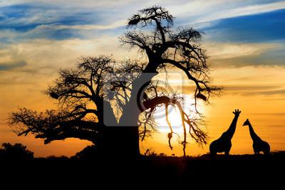 Постер Африканский пейзаж Эффектный Африканский закатАфриканский пейзаж<br>Постер на холсте или бумаге. Любого нужного вам размера. В раме или без. Подвес в комплекте. Трехслойная надежная упаковка. Доставим в любую точку России. Вам осталось только повесить картину на стену!<br>