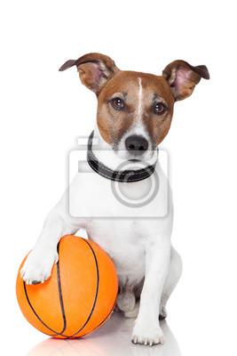 Постер Спорт Баскетбол победитель собака, 20x30 см, на бумагеБаскетбол<br>Постер на холсте или бумаге. Любого нужного вам размера. В раме или без. Подвес в комплекте. Трехслойная надежная упаковка. Доставим в любую точку России. Вам осталось только повесить картину на стену!<br>
