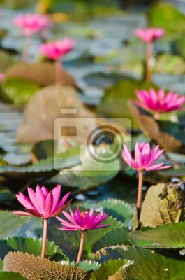 Постер Лотос Озеро розовая водяная ЛилияЛотос<br>Постер на холсте или бумаге. Любого нужного вам размера. В раме или без. Подвес в комплекте. Трехслойная надежная упаковка. Доставим в любую точку России. Вам осталось только повесить картину на стену!<br>