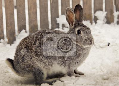 Постер Животные Кролик, 27x20 см, на бумагеЗайцы<br>Постер на холсте или бумаге. Любого нужного вам размера. В раме или без. Подвес в комплекте. Трехслойная надежная упаковка. Доставим в любую точку России. Вам осталось только повесить картину на стену!<br>