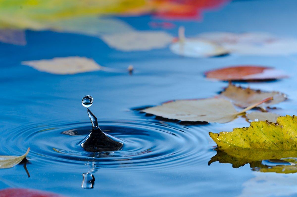 Постер Осень Капле воды в пруду с осенними листьямиОсень<br>Постер на холсте или бумаге. Любого нужного вам размера. В раме или без. Подвес в комплекте. Трехслойная надежная упаковка. Доставим в любую точку России. Вам осталось только повесить картину на стену!<br>