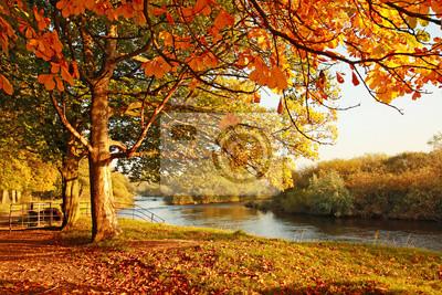 Постер Осень Красивая Осень в паркеОсень<br>Постер на холсте или бумаге. Любого нужного вам размера. В раме или без. Подвес в комплекте. Трехслойная надежная упаковка. Доставим в любую точку России. Вам осталось только повесить картину на стену!<br>