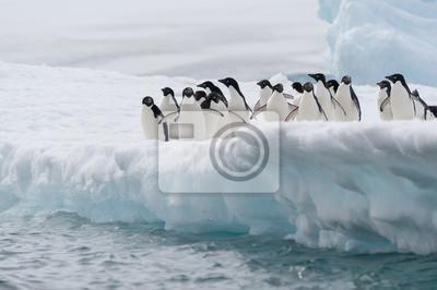 Пингвины Адели колонии собирается прыгать в воду из айсберга,, 30x20 см, на бумагеПингвины<br>Постер на холсте или бумаге. Любого нужного вам размера. В раме или без. Подвес в комплекте. Трехслойная надежная упаковка. Доставим в любую точку России. Вам осталось только повесить картину на стену!<br>