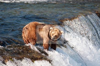 Постер Животные Аляскинский бурый медведь рыбалка на чавычу, 30x20 см, на бумагеМедведи<br>Постер на холсте или бумаге. Любого нужного вам размера. В раме или без. Подвес в комплекте. Трехслойная надежная упаковка. Доставим в любую точку России. Вам осталось только повесить картину на стену!<br>