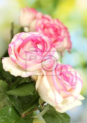 Постер Цветы Красивый букет из розовых роз, на зеленом фоне, 20x28 см, на бумагеРозы<br>Постер на холсте или бумаге. Любого нужного вам размера. В раме или без. Подвес в комплекте. Трехслойная надежная упаковка. Доставим в любую точку России. Вам осталось только повесить картину на стену!<br>