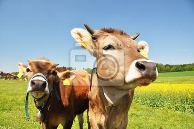 Постер Животные Швейцарские коровы, 30x20 см, на бумагеКоровы<br>Постер на холсте или бумаге. Любого нужного вам размера. В раме или без. Подвес в комплекте. Трехслойная надежная упаковка. Доставим в любую точку России. Вам осталось только повесить картину на стену!<br>