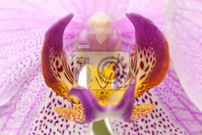 Постер Орхидеи Фрагмент цветка орхидеи розовойОрхидеи<br>Постер на холсте или бумаге. Любого нужного вам размера. В раме или без. Подвес в комплекте. Трехслойная надежная упаковка. Доставим в любую точку России. Вам осталось только повесить картину на стену!<br>