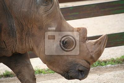 Rinoceronte, 30x20 см, на бумагеНосороги<br>Постер на холсте или бумаге. Любого нужного вам размера. В раме или без. Подвес в комплекте. Трехслойная надежная упаковка. Доставим в любую точку России. Вам осталось только повесить картину на стену!<br>