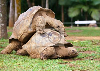 Постер Черепахи Две черепахи, сочувствующих друг другуЧерепахи<br>Постер на холсте или бумаге. Любого нужного вам размера. В раме или без. Подвес в комплекте. Трехслойная надежная упаковка. Доставим в любую точку России. Вам осталось только повесить картину на стену!<br>