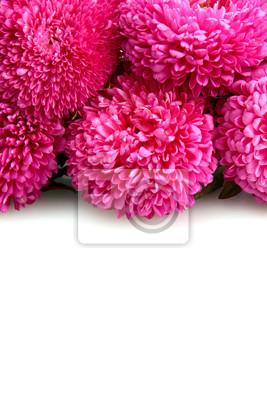 Постер Астры Розовый aster цветы, изолированных на беломАстры<br>Постер на холсте или бумаге. Любого нужного вам размера. В раме или без. Подвес в комплекте. Трехслойная надежная упаковка. Доставим в любую точку России. Вам осталось только повесить картину на стену!<br>