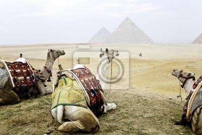 Постер Египетские пирамиды Постер 45753489, 30x20 см, на бумагеЕгипетские пирамиды<br>Постер на холсте или бумаге. Любого нужного вам размера. В раме или без. Подвес в комплекте. Трехслойная надежная упаковка. Доставим в любую точку России. Вам осталось только повесить картину на стену!<br>