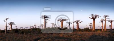 Постер Африканский пейзаж Авеню БаобабыАфриканский пейзаж<br>Постер на холсте или бумаге. Любого нужного вам размера. В раме или без. Подвес в комплекте. Трехслойная надежная упаковка. Доставим в любую точку России. Вам осталось только повесить картину на стену!<br>