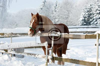 Лошадь зимой, 30x20 см, на бумагеЛошади<br>Постер на холсте или бумаге. Любого нужного вам размера. В раме или без. Подвес в комплекте. Трехслойная надежная упаковка. Доставим в любую точку России. Вам осталось только повесить картину на стену!<br>
