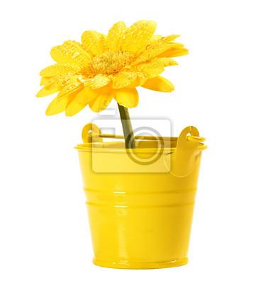 Постер Герберы Желтый цветок Гербера в маленькое желтое ведроГерберы<br>Постер на холсте или бумаге. Любого нужного вам размера. В раме или без. Подвес в комплекте. Трехслойная надежная упаковка. Доставим в любую точку России. Вам осталось только повесить картину на стену!<br>