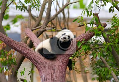 Постер Китай Спящий гигант panda ребенкаКитай<br>Постер на холсте или бумаге. Любого нужного вам размера. В раме или без. Подвес в комплекте. Трехслойная надежная упаковка. Доставим в любую точку России. Вам осталось только повесить картину на стену!<br>