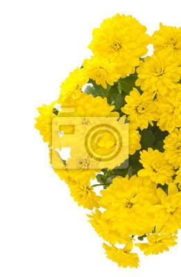 Постер Хризантемы Красивые желтые хризантемыХризантемы<br>Постер на холсте или бумаге. Любого нужного вам размера. В раме или без. Подвес в комплекте. Трехслойная надежная упаковка. Доставим в любую точку России. Вам осталось только повесить картину на стену!<br>