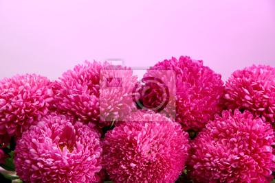 Постер Астры Красивые aster цветы на розовом фонеАстры<br>Постер на холсте или бумаге. Любого нужного вам размера. В раме или без. Подвес в комплекте. Трехслойная надежная упаковка. Доставим в любую точку России. Вам осталось только повесить картину на стену!<br>