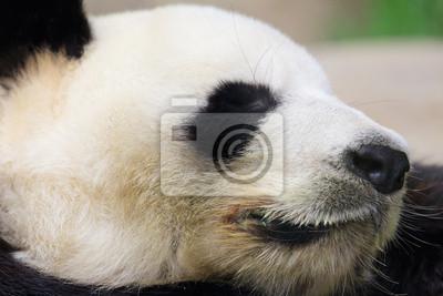 Спальный panda, 30x20 см, на бумагеПанда<br>Постер на холсте или бумаге. Любого нужного вам размера. В раме или без. Подвес в комплекте. Трехслойная надежная упаковка. Доставим в любую точку России. Вам осталось только повесить картину на стену!<br>