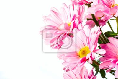 Постер Хризантемы Розовый цветок хризантемыХризантемы<br>Постер на холсте или бумаге. Любого нужного вам размера. В раме или без. Подвес в комплекте. Трехслойная надежная упаковка. Доставим в любую точку России. Вам осталось только повесить картину на стену!<br>