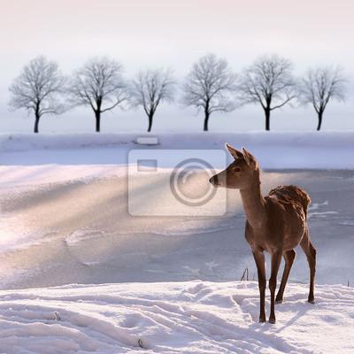 Постер Русская природа Лань, снежный пейзажРусская природа<br>Постер на холсте или бумаге. Любого нужного вам размера. В раме или без. Подвес в комплекте. Трехслойная надежная упаковка. Доставим в любую точку России. Вам осталось только повесить картину на стену!<br>