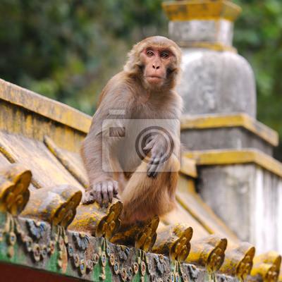 Постер Животные Обезьяна в обезьяний храм в Непале ( Swayambhunath ), 20x20 см, на бумагеОбезьяны<br>Постер на холсте или бумаге. Любого нужного вам размера. В раме или без. Подвес в комплекте. Трехслойная надежная упаковка. Доставим в любую точку России. Вам осталось только повесить картину на стену!<br>