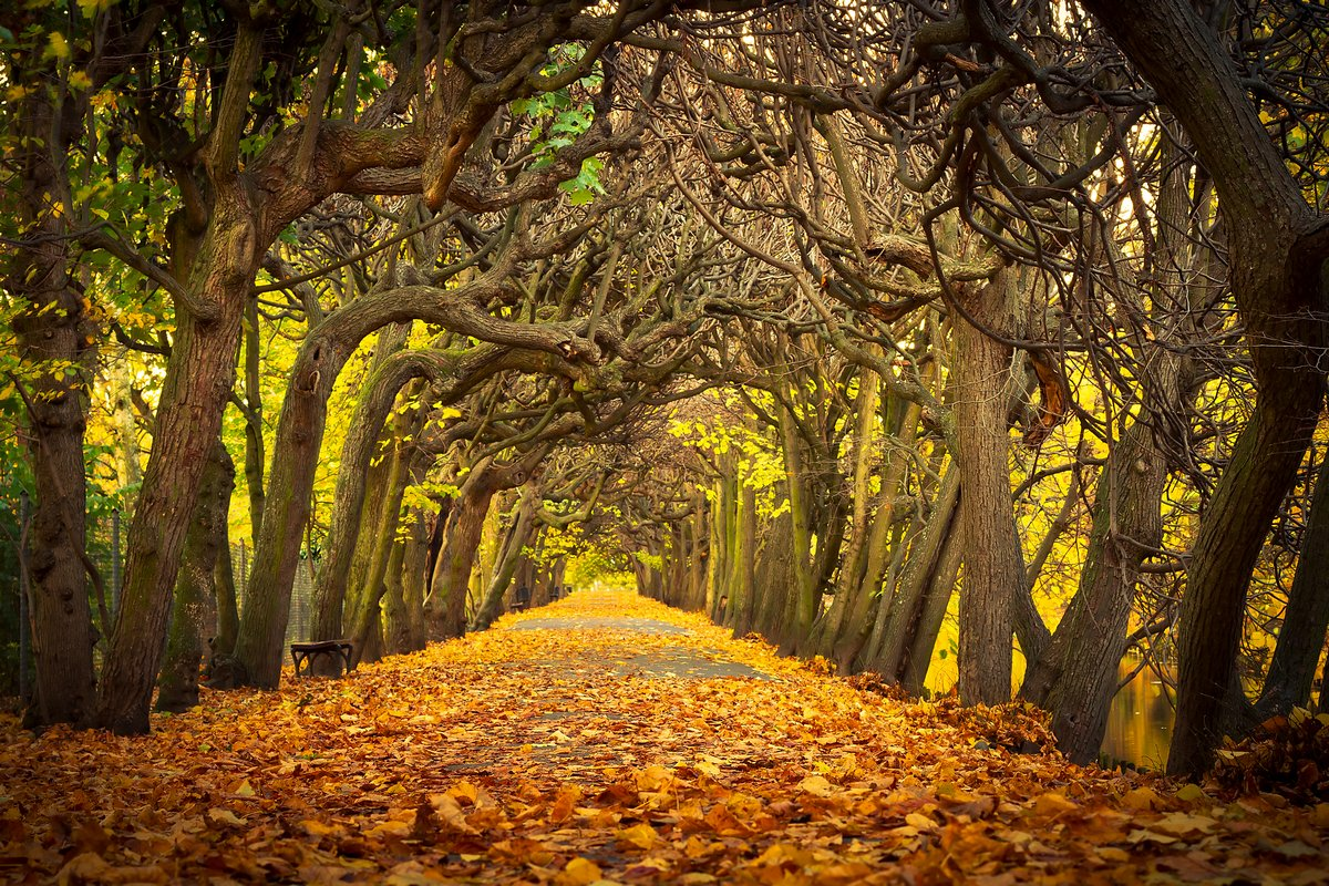 Постер Осень Осенняя аллея в парке Гданьск, ПольшаОсень<br>Постер на холсте или бумаге. Любого нужного вам размера. В раме или без. Подвес в комплекте. Трехслойная надежная упаковка. Доставим в любую точку России. Вам осталось только повесить картину на стену!<br>