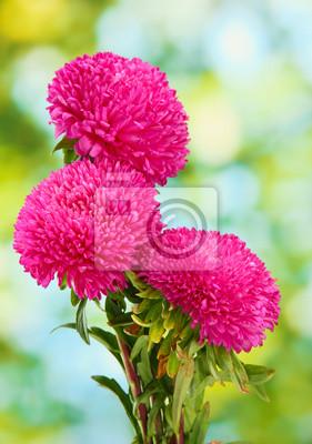 Постер Астры Красивые aster цветы, на зеленом фонеАстры<br>Постер на холсте или бумаге. Любого нужного вам размера. В раме или без. Подвес в комплекте. Трехслойная надежная упаковка. Доставим в любую точку России. Вам осталось только повесить картину на стену!<br>