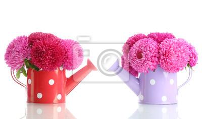 Постер Астры Розовый aster цветы в лейку, изолированных на беломАстры<br>Постер на холсте или бумаге. Любого нужного вам размера. В раме или без. Подвес в комплекте. Трехслойная надежная упаковка. Доставим в любую точку России. Вам осталось только повесить картину на стену!<br>