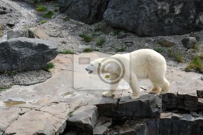 Квебек, медведь в Зоопарке sauvage Санкт Felicien, 30x20 см, на бумагеМедведи<br>Постер на холсте или бумаге. Любого нужного вам размера. В раме или без. Подвес в комплекте. Трехслойная надежная упаковка. Доставим в любую точку России. Вам осталось только повесить картину на стену!<br>