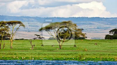 Постер Кения Красивые Африканский пейзаж, Озеро Найваша, КенияКения<br>Постер на холсте или бумаге. Любого нужного вам размера. В раме или без. Подвес в комплекте. Трехслойная надежная упаковка. Доставим в любую точку России. Вам осталось только повесить картину на стену!<br>