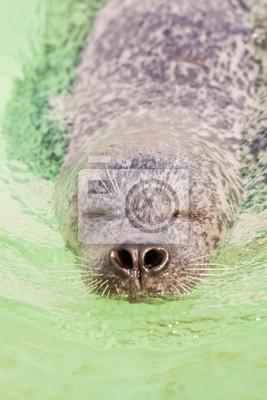 Милые печать в бассейне. Плавать и играть в воде., 20x30 см, на бумагеТюлени и морские котики<br>Постер на холсте или бумаге. Любого нужного вам размера. В раме или без. Подвес в комплекте. Трехслойная надежная упаковка. Доставим в любую точку России. Вам осталось только повесить картину на стену!<br>