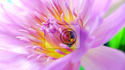 Постер Цветы Пчела внутри lotus, 36x20 см, на бумагеЛотос<br>Постер на холсте или бумаге. Любого нужного вам размера. В раме или без. Подвес в комплекте. Трехслойная надежная упаковка. Доставим в любую точку России. Вам осталось только повесить картину на стену!<br>