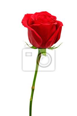 Постер Розы Красивые красные розы, изолированных на белом фонеРозы<br>Постер на холсте или бумаге. Любого нужного вам размера. В раме или без. Подвес в комплекте. Трехслойная надежная упаковка. Доставим в любую точку России. Вам осталось только повесить картину на стену!<br>