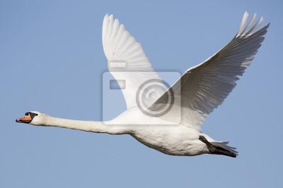 Постер Лебеди