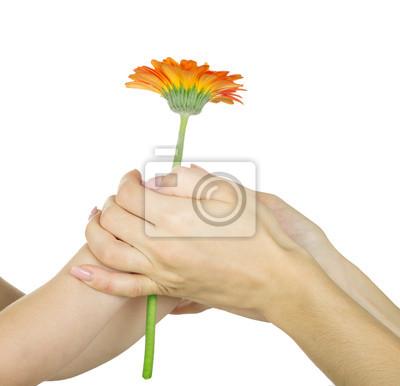 Постер Ромашки Детская рука, держащая цветокРомашки<br>Постер на холсте или бумаге. Любого нужного вам размера. В раме или без. Подвес в комплекте. Трехслойная надежная упаковка. Доставим в любую точку России. Вам осталось только повесить картину на стену!<br>