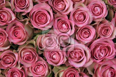 Постер Розы Розовые розы в группеРозы<br>Постер на холсте или бумаге. Любого нужного вам размера. В раме или без. Подвес в комплекте. Трехслойная надежная упаковка. Доставим в любую точку России. Вам осталось только повесить картину на стену!<br>