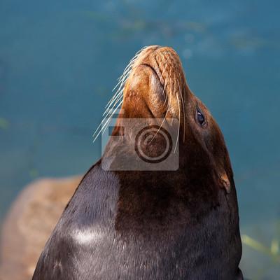 Морской Лев  в Morro Bay, штат Калифорния, США, 20x20 см, на бумагеТюлени и морские котики<br>Постер на холсте или бумаге. Любого нужного вам размера. В раме или без. Подвес в комплекте. Трехслойная надежная упаковка. Доставим в любую точку России. Вам осталось только повесить картину на стену!<br>