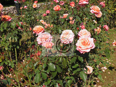 Постер Розы Розовая Роза 15 @ kazama14Розы<br>Постер на холсте или бумаге. Любого нужного вам размера. В раме или без. Подвес в комплекте. Трехслойная надежная упаковка. Доставим в любую точку России. Вам осталось только повесить картину на стену!<br>