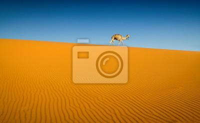 Постер Африканский пейзаж Верблюд в пустыне СахараАфриканский пейзаж<br>Постер на холсте или бумаге. Любого нужного вам размера. В раме или без. Подвес в комплекте. Трехслойная надежная упаковка. Доставим в любую точку России. Вам осталось только повесить картину на стену!<br>