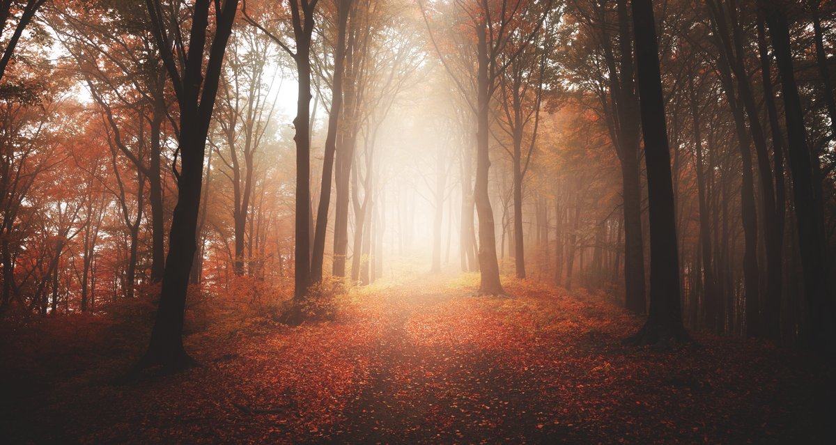 Постер Осень Осенний туманный лесОсень<br>Постер на холсте или бумаге. Любого нужного вам размера. В раме или без. Подвес в комплекте. Трехслойная надежная упаковка. Доставим в любую точку России. Вам осталось только повесить картину на стену!<br>