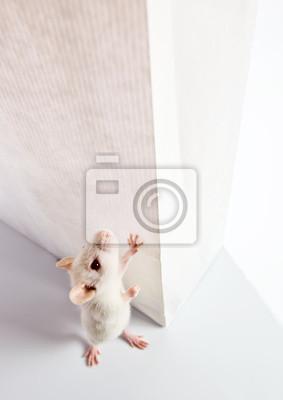 Постер Мыши