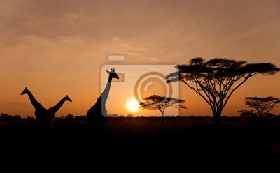 Постер Африканский пейзаж Силуэты жирафов на закатеАфриканский пейзаж<br>Постер на холсте или бумаге. Любого нужного вам размера. В раме или без. Подвес в комплекте. Трехслойная надежная упаковка. Доставим в любую точку России. Вам осталось только повесить картину на стену!<br>