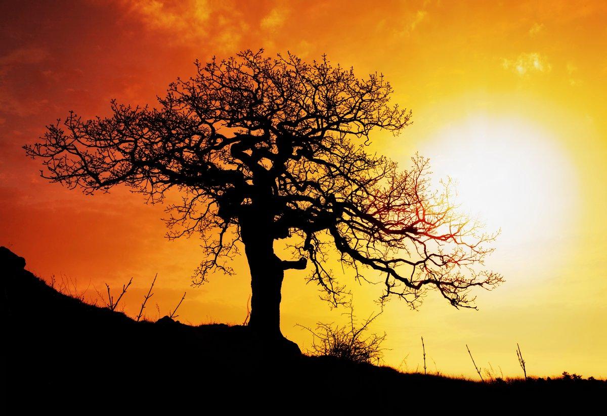 Постер Африканский пейзаж Только деревоАфриканский пейзаж<br>Постер на холсте или бумаге. Любого нужного вам размера. В раме или без. Подвес в комплекте. Трехслойная надежная упаковка. Доставим в любую точку России. Вам осталось только повесить картину на стену!<br>