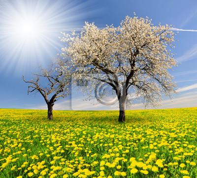 Постер Пейзаж равнинный Весной дерево на поле одуванчиковПейзаж равнинный<br>Постер на холсте или бумаге. Любого нужного вам размера. В раме или без. Подвес в комплекте. Трехслойная надежная упаковка. Доставим в любую точку России. Вам осталось только повесить картину на стену!<br>