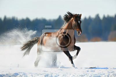 Постер Животные Коричневая лошадь работает в зимний пейзаж, 30x20 см, на бумагеЛошади<br>Постер на холсте или бумаге. Любого нужного вам размера. В раме или без. Подвес в комплекте. Трехслойная надежная упаковка. Доставим в любую точку России. Вам осталось только повесить картину на стену!<br>