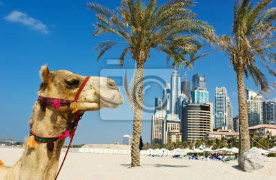 Постер ОАЭ Верблюд на городской застройки фоне Дубай.ОАЭ<br>Постер на холсте или бумаге. Любого нужного вам размера. В раме или без. Подвес в комплекте. Трехслойная надежная упаковка. Доставим в любую точку России. Вам осталось только повесить картину на стену!<br>