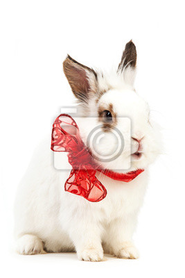 Белый фантазии кролика с луком над белым, 20x30 см, на бумагеКролики<br>Постер на холсте или бумаге. Любого нужного вам размера. В раме или без. Подвес в комплекте. Трехслойная надежная упаковка. Доставим в любую точку России. Вам осталось только повесить картину на стену!<br>