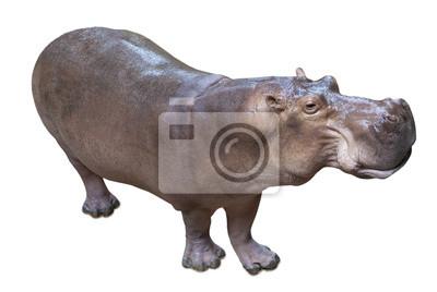 Постер Бегемоты
