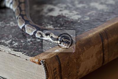 Постер Рептилии Python змея на старинных книгРептилии<br>Постер на холсте или бумаге. Любого нужного вам размера. В раме или без. Подвес в комплекте. Трехслойная надежная упаковка. Доставим в любую точку России. Вам осталось только повесить картину на стену!<br>